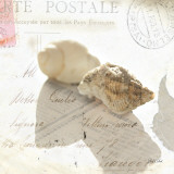 Postal Shells I