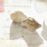 Postal Shells I