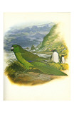 Antipodes Green Parakeet no 241
