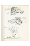 Descrptive Parts of a Parrot no 23