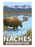 Naches  Washington - Moose Drinking