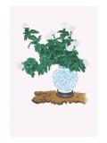 Shiragiku (White Chrysanthemum) In a Blue And White Tsubo