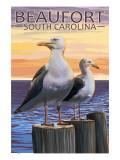 Sea Gulls - Beaufort  South Carolina