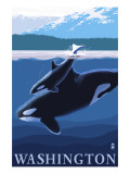 Orca and Calf - Washington