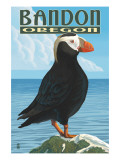 Bandon  Oregon - Puffin