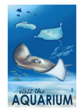 Rays - Visit the Aquarium
