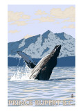 Prince Rupert  BC Canada - Humpback Whale