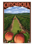 Georgia - Peach Orchard Scene