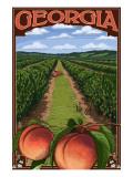 Georgia - Peach Orchard Scene
