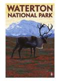 Waterton National Park  Canada - Caribou & Mountain