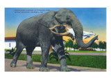 Sarasota  Florida - Ringling Brothers Circus; Elephant Holding Man with Mouth