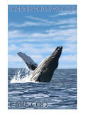 Hyannis Whale Watcher - Cape Cod  MA