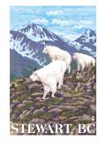 Stewart  BC - Goat Family