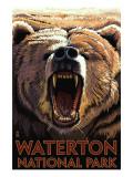 Waterton National Park  Canada - Bear Roaring