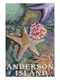 Anderson Island  WA Tidepools