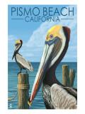 Pismo Beach  California - Pelicans