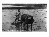 Hawaii - Farmer and Water Buffalo