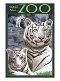 Visit the Zoo - White Tiger Family
