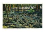 St Augustine  Florida - Alligator-Ostrich Farm Scene