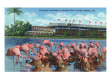 Hialeah  Florida - View of Flamingos outside the Hialeah Race Course