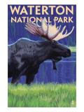 Waterton National Park  Canada - Moose at Night