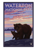 Waterton National Park  Canada - Bear &amp; Cub
