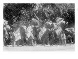 Circus Elephants Visit the White House