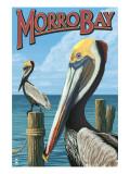Morro Bay  CA - Pelicans