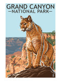 Grand Canyon National Park - Mountain Lion