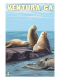 Ventura  California - Sea Lions