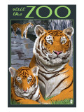 Visit the Zoo - Tiger Family