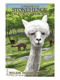 America&#39;s Stonehenge  New Hampshire - Alpacas