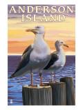 Anderson Island  WA Sea Gulls