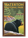 Waterton National Park  Canada - Bear in Forest