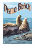 Pismo Beach  California - Sea Lions