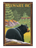 Stewart  BC - Bear in Forest