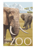 African Elephant - Visit the Zoo