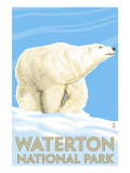 Waterton National Park  Canada - Polar Bear