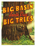 Santa Cruz  California - Big Trees Park  Big Basin Letters