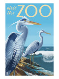 Blue Heron - Visit the Zoo