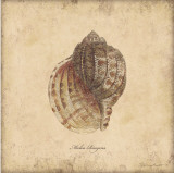 Shells IV