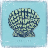 Scallop