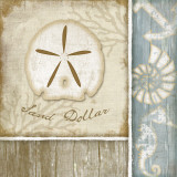 Sand Dollar