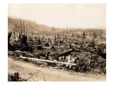 Aftermath of Forest Fire  Washington State  Circa 1909