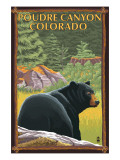 Poudre Canyon  Colorado - Bear in Forest