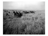 Wheat Farming  Circa 1913