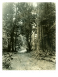 Olympic Peninsula  Undated