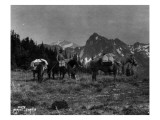 Pack Train  Solduc Boulder Divide  Olympic Peninsula  Undated