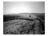 Flock of Sheep Near Ellensburg  WA  1912