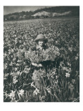 Flowers in Puyallup  1925